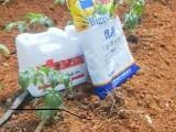 番茄西紅柿專用水溶肥蔬菜專用水溶肥