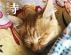 为小猫咪团团找一个温暖的家(不收取任何费用)