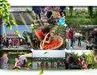 上海浦东南汇农家乐 西瓜葡萄采摘 品灶头饭 住农家院