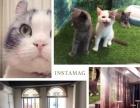 猫的亭宠物猫,蓝猫,美短,英短