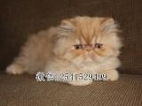 南阳哪里有正规的猫舍 加菲猫价格多少 南阳哪里有卖加菲猫