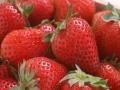 兴隆草莓 兴隆草莓加盟招商