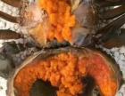缅甸膏母螃蟹