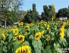 最大容纳量松湖生态园农家乐/企业拓展培训一日游
