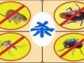 南宁市白蚁防治 除四害防治白蚁灭跳蚤灭蟑灭老鼠等四害消杀
