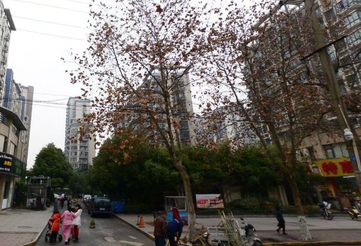 长江长二期 毛坯三房 花园小区 购物方便 交通便利