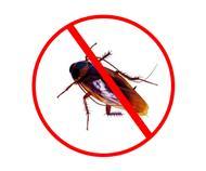 安徽六安市专业捉老鼠消灭老鼠的较佳办法合作请咨询