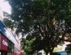 南新路旺铺转让 近欢乐颂荔香中学 门口就是公交站