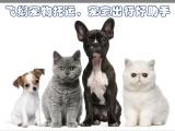 惠州飞鹅宠物托运,惠州人自己的宠物托运