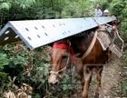 广西专业马帮运输