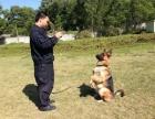 珠海帕比训犬学校/狗狗训练/狗狗寄养