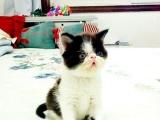加菲猫 2200元