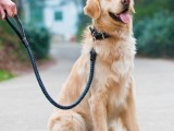 武汉新洲宠物训犬基地 专业训犬电话
