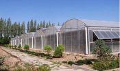 潍坊温室大棚厂家|优质蔬菜温室大棚
