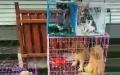 出售暹罗,蓝猫各种宠物猫和狗