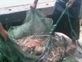 出海捕鱼体验渔民捕鱼生活