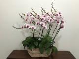 专业绿植租摆绿化养护办公室植物租赁花卉租赁