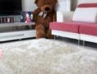 绿奥年底钜惠:窗帘地毯9折优惠