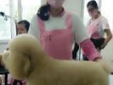 闵行丨上海户籍人员免费学习宠物美容