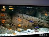 专业清洗鱼缸出售鱼缸鱼缸长期维护鱼缸搬运观赏鱼
