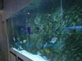 大型鱼缸,家用鱼缸,公司鱼缸,入户鱼缸,山水鱼缸,水草缸