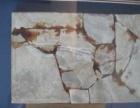 中华潜龙古生物化石。一亿四千万年古生物