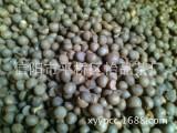 茶叶种子 茶树种子 品种纯正 茶叶籽厂家