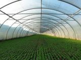 蔬菜大棚建设-温室大棚制造商