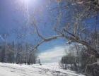 穿越通话世界,东北雪乡观冰灯、穿越林海、观雾凇、滑雪、冬捕、雪地