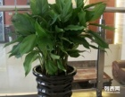 南昌市红谷滩租花,供应鲜花,花卉植物租赁销售