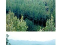 南阳桐柏县回龙镇1200亩用材林地转让