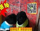 狗场直销◕纯种健康 泰迪熊 幼犬◕支持看狗◕送用品