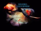 (龙宫水族李管家) 上门清洗鱼缸