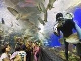52深圳出發港澳純玩3天2晚海洋公園維多利亞港澳門獨特游