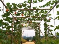 开心农场团队活动农家乐野炊做饭石磨豆浆果园观光采摘
