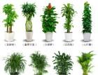 室内绿植租摆 花卉植物第十六��F�e室之中租售 广州租花 绿植租赁
