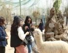 辉县五龙山动物园特价35元(一大一小)