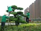 厦门修剪小区办公楼学校酒店政府部门绿植花卉园林景观绿化养护