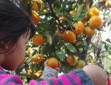 上海农家乐旅游推荐 采桔子钓大鱼 烧烤划船 吃香喷喷土菜
