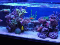 深圳上门鱼缸定做,鱼缸清洗换水,鱼缸维修护理等服务