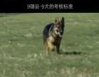宠物教程(全套)