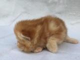 电影版加菲猫 很可爱求转让