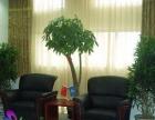 【名卉源】专业高端写字楼,办公室绿植花卉租赁养护
