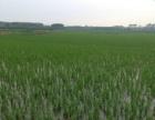 武宣 农田 10000平米