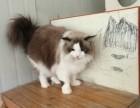 丰益桥寄养宠物猫狗 单间寄养散养 有暖气 可接送