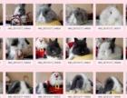 自己家的宠物兔,猫猫兔,垂耳兔,侏儒兔