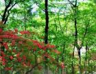 4月18日-银树沟赏杜鹃,登山,健身,穿越 小华山