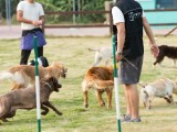 部隊退役訓犬教官十年以上訓犬經驗,環境舒適 管理完善