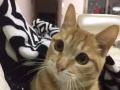 泉州猫咪寄养猫洗澡家庭式宠物 猫咪寄养
