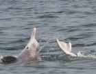 三娘湾看海豚、出海捕鱼、出海钓鱼等各种渔家生活体验
